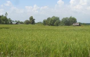 ティラワ2,000 ヘクタール開発予定区域の農地と家(2014年10月)