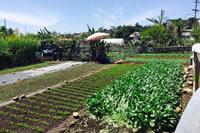 サンディエゴのコミュニティガーデンの様子。難民が自由に植物を育てることが出来る。農業に関心がある難民は、試作にも取り組める。
