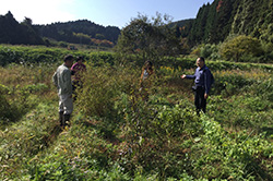三村さんの畑。自然栽培♪