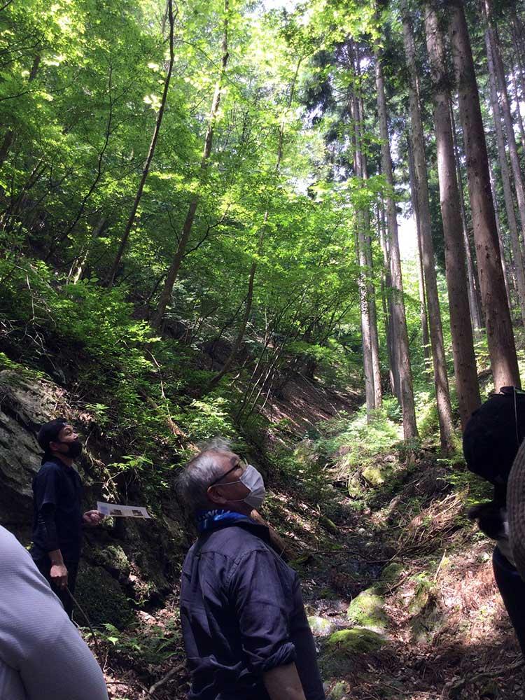 谷を挟んで、左手が広葉樹、右手が針葉樹の人工林